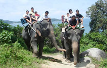 elephant ride Rat